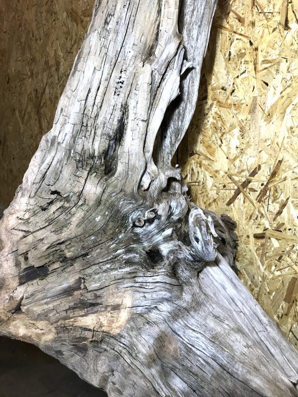Natural Large Driftwood Art Sculpture